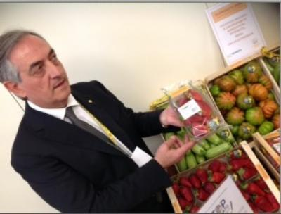 Coldiretti: rispettare le regole della filiera agrumicola per evitare lo sfruttamento