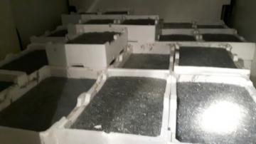 Maxi sequestro di oltre 1000 Kg di novellame di sarda