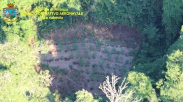 Sequestrate e distrutte piantagioni di canapa indiana